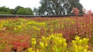 Onderhoudspakket sedumdak plantjes op dak